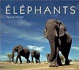 Image de Éléphants