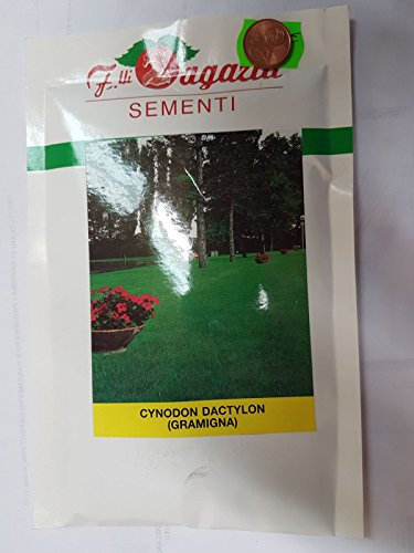 SEMENTI PRATO VERDE CYNODON DACTYLON ( GRAMIGNA ) BUSTINA GR. 100 IN SEMI