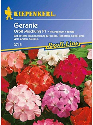 Pelargonium x zonale Geranien Mischung