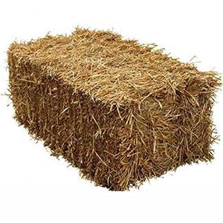 Fleet Farm™ Handy Size Barley Straw Bale - Feed Quality (90cm x 50cm x 40cm) 16