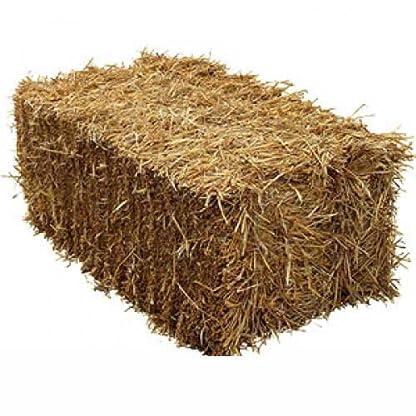 Fleet Farm™ Handy Size Barley Straw Bale - Feed Quality (90cm x 50cm x 40cm) 1
