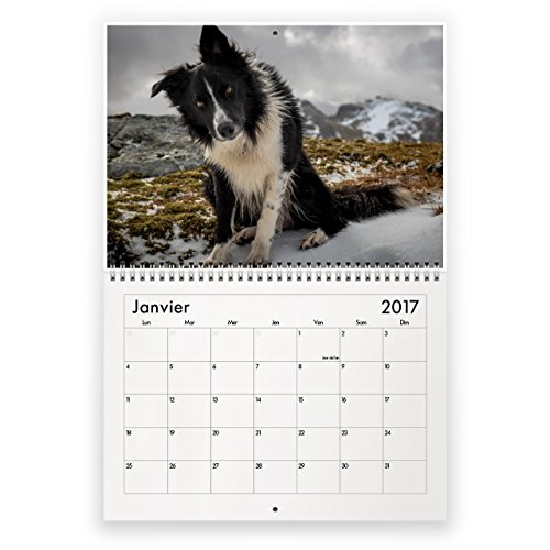 border-collie-2017-calendrier-mural
