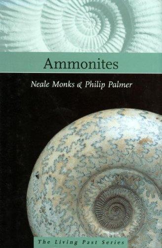 Ammonites por Neale Monks