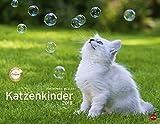 Katzenkinder Posterkalender - Kalender 2018