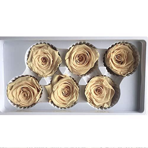 Ancdream 6 Echte, Konservierte Rosenköpfe; Blütenfarbe Champagner