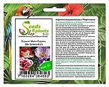 Stk - 25x Papaver Mohn Poppies Mix Samen Saatgut Garten Pflanze Frisch #165 - Seeds Plants Shop Samenbank Pfullingen Patrik Ipsa
