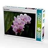 Rosa Orchideen 2000 Teile Puzzle quer