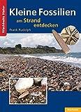 Kleine Fossilien am Strand entdecken - Frank Rudolph
