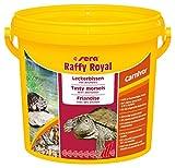 sera 32296 raffy Royal 3,8 Ltr. der Leckerbissen aus naturbelassenen, schonend getrockneten Fischen (50 %) und Garnelen (50 %) für Wasserschildkröten