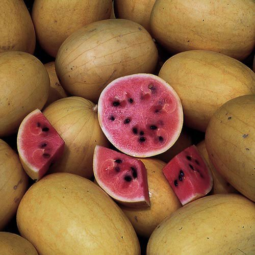 ungarische Golden Midget Wassermelone, 90-100 Tage, 10 Samen