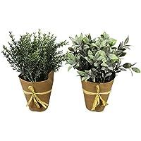 Suchergebnis Auf Amazonde Für Kräuter Kunstblumen Pflanzen