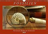 Fossilien - Versteinerte Relikte der Erdzeitalter (Wandkalender 2019 DIN A4 quer): Einen Querschnitt durch die Vielfalt