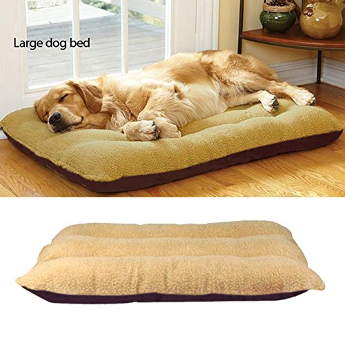 tapis pour chien les bons plans de micromonde. Black Bedroom Furniture Sets. Home Design Ideas