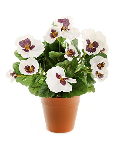 closer-to-nature-hbc006wpe-planta-de-pensamiento-artificial-30-cm-color-blanco