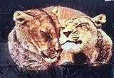 Natur-Fell-Shop Kuscheldecke Tagesdecke Decke Motiv Löwe/Löwen 160x200cm