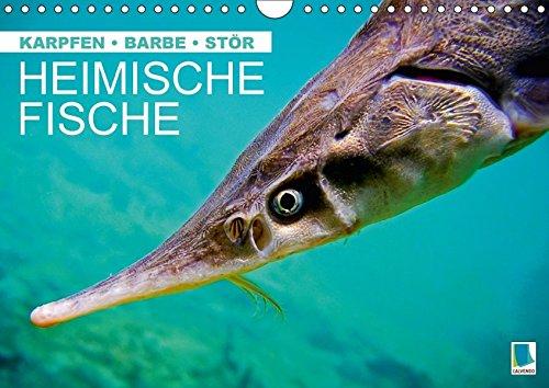 Heimische Fische: Karpfen, Barbe, Stör (Wandkalender 2017 DIN A4 quer): Fische in unseren heimischen Gewässern (Monatskalender, 14 Seiten) (CALVENDO Tiere) [Mar 25, 2016] CALVENDO, k.A.