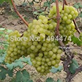 mixed 100 seeds/pack grape fruit seed se...