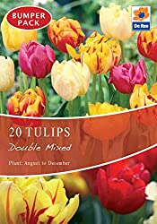 Tulip Bulbs Double Mixed (20 Bulbs) Autumn Planting / Spring Flowering Bulbs Plant August - December. These Double Early Tulip Mix -Tulip bulbs will be perfect situated in beds, borders and containers around your garden. Once established, they'll add...