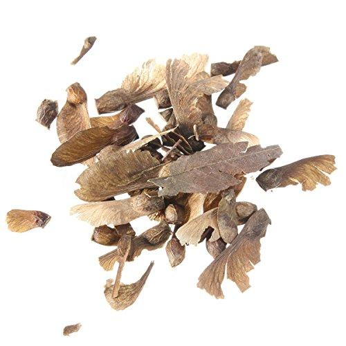 20 graines bonsaïs d'arbres d'ér...