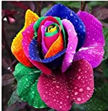 Lamdoo 60 Stücke Regenbogen Rose samen Blumensamen Holland Regenbogen Rose Samen Für Zuhause Gartenarbeit (Bunte)