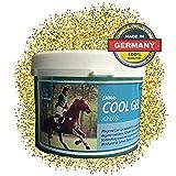 EMMA  Gel Naturale del Cavallo a Base di Arnica Cura e unguento per Le Gambe, balsamo per Cavalli Fresco e per la Pelle, Spalle o Schiena, Relax e benefico per i tendini 1000 ml