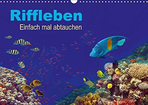 Riffleben - Einfach mal abtauchen (Wandkalender 2018 DIN A3 quer): Eintauchen in die bunte Unterwasserwelt (Monatskalender, 14 Seiten) (CALVENDO Natur)
