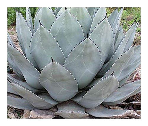 the mezcal rush explorations in agave country