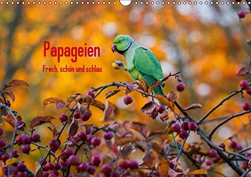 Papageien - Frech, schön und schlau (Wandkalender 2019 DIN A3 quer): Wunderschöne Papageien in ihrem natürlichen Umfeld. (Monatskalender, 14 Seiten) (CALVENDO Tiere)