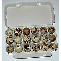 Wachtel-Eier, je 15 (+3 gratis) Wachteleier direkt vom Erzeuger, tages-frische Delikatesse aus der Altmark