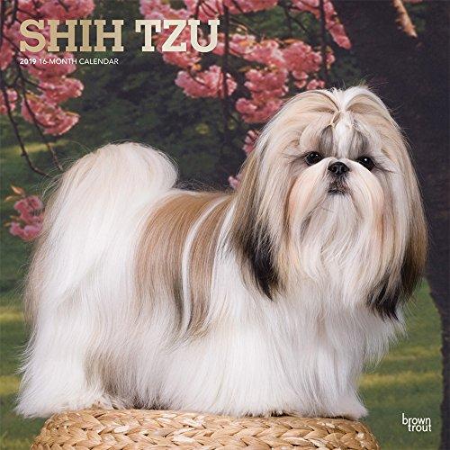 Shih Tzu 2019 Square Foil por Inc Browntrout Publishers