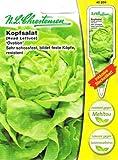 Kopfsalat Ovation resistent, sehr schossfest, bildet feste Köpfe
