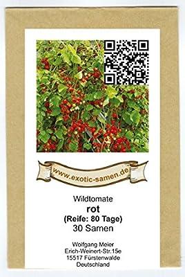 Wildtomate rot - krankheitsresistent - auch für den Kübel oder Hängeampel - 30 Samen von exotic-samen bei Du und dein Garten