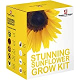 umwerfend Sonnenblumenkerne Wachstums Set Geschenkbox von Thompson & Morgan 5 Farbenreich & Kontrast Blumen to Grow ; Helios, Samt Königin, Zwerg gelb Sprüh , & Valentin Samen