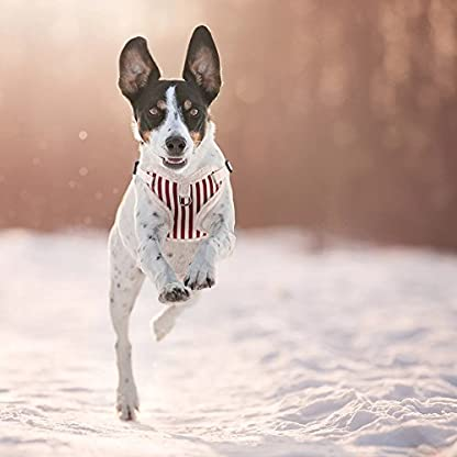 PETBABA Christmas Dog Harness, Soft Fleece Vest Warm Puppy in Winter, Front Clip Provide No Pull Choke Free Walk, Bow… 7