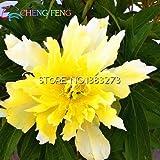 2016 cinese peonia albero Seeds 5 PC di casa Peony semi di fiore raro Flores piante perenni Fiori Bulbi semi di bonsai da interno piante