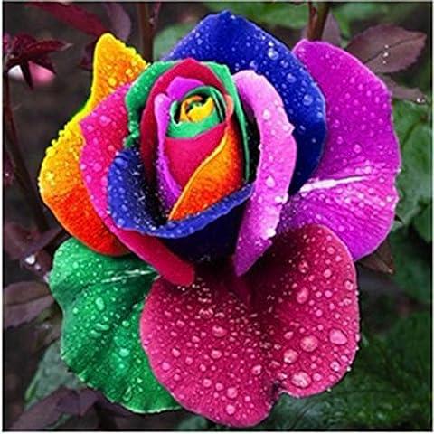 200PCS Arc en ciel Rose fleurs Jardin Multicolor Graines