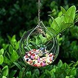 JER Ball fürm klar hängende Glaskugel Pflanze Blume Vase Dekoration 5,5 cm Mund Alltagsgebrauchsgegenstände