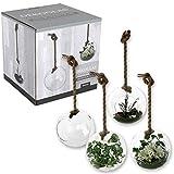 Annastore Dekoglas - Vase mit Seil zum Hängen L 70 cm Hängedekoglas Hängevase Hängedeko Glasdeko
