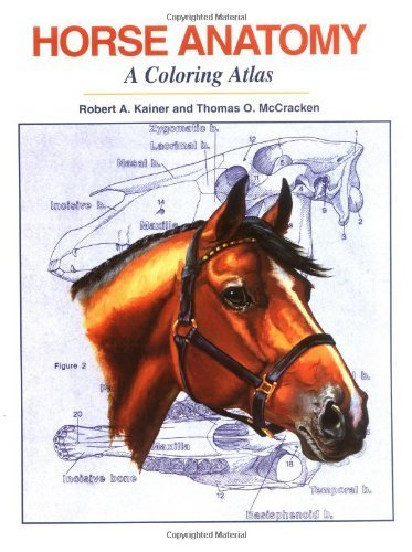 Horse Anatomy: A Coloring Atlas, 2nd Edition by Robert A. Kainer, DVM, Thomas O. McCracken (1998) Spiral-bound