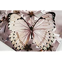 Graham & Brown 41-498 Butterfly Branch with Glitter Printed Canvas Wall Art preiswert