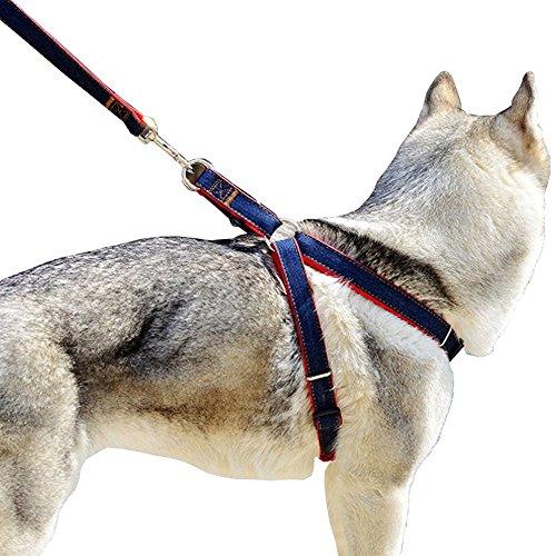 Bobi Hundeleine Hundegeschirr Set, Verstellbare und Schwerer Denim Haustier Nylon Leine Hundehalsband für Großen Mittleren Kleinen Hunde, Brustumfang t 30-70cm, Länge: 120cm (M - Brust: 35-55 cm)