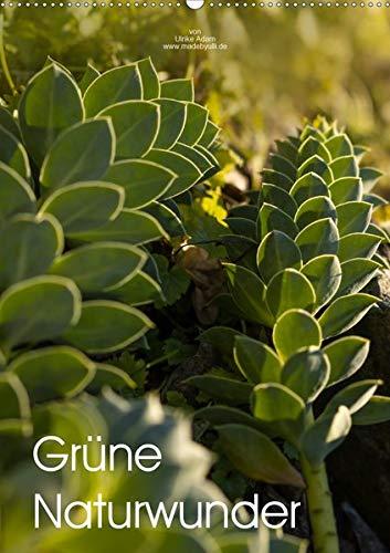 Birke-brücke (Grüne Naturwunder (Wandkalender 2020 DIN A2 hoch): Das zarte Grün der Natur verzaubert uns das ganze Jahr (Familienplaner, 14 Seiten ) (CALVENDO Natur))