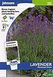 johnsons seeds - Pictorial Pack - Fiore - Lavanda Munstead Strain - 150 Semi