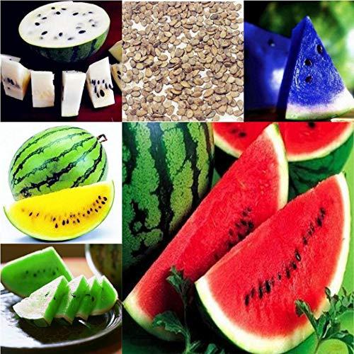 Qulista Samenhaus - 100pcs Selten Mehrfarbig BIO-Wassermelone F1 Obstsamen winterhart mehrjährig für Gärten und auf Balkon & Terrasse