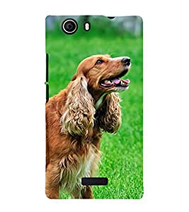 Fiobs Designer Back Case Cover for Micromax Canvas Nitro 2 E311 (Black Dog Kutta Brown Friend)