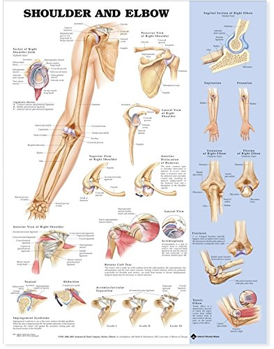 Shoulder and Elbow Anatomical Chart por anatomical-chart-company