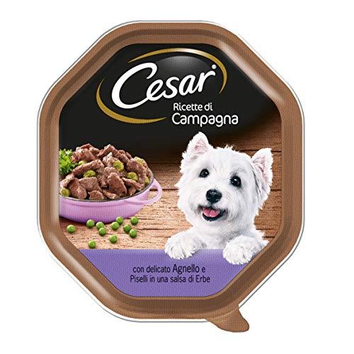 Cesar Recetas de Campo con Delicado Cordero y Guisantes en una Salsa de Hierbas 150G–Comida para Perros–Pack de 14Unidades