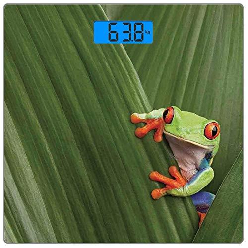 Präzisions-Digital-Körpergewichtswaage Animal Decor Ultraflache Personenwaage aus gehärtetem Glas Genaue Gewichtsmessungen, Rotaugenlaubfrosch, der sich im exotischen Makroblatt im tropischen Regenwal