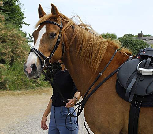 Windsor Leder Trensenzaum mit hannoversches Reithalfter Flash (Pony schwarz) -