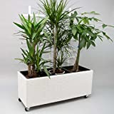 Blumentrog Pflanztrog Raumteiler Polyrattan mit Rankgitter Rechteck LxBxH 82x30x100cm weiß